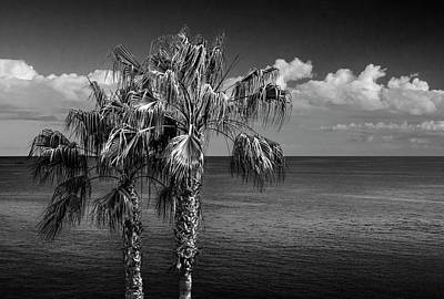 Photograph - Palm Trees In Black And White At Laguna Beach by Randall Nyhof