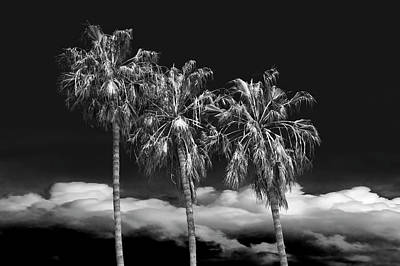Art Print featuring the photograph Palm Trees In Black And White On Cabrillo Beach by Randall Nyhof