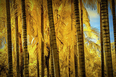 Photograph - Palm Trees In Infrared At The Huntington Library by Randall Nyhof