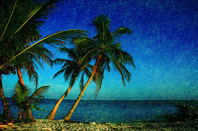 Beach Scenes Photograph - Palm Trees In Key West by Susanne Van Hulst