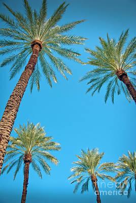 Photograph - Palm Trees In The Desert by David Zanzinger