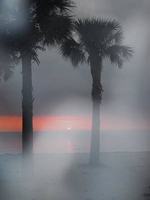 Photograph - Palm Trees In The Fog by Penfield Hondros