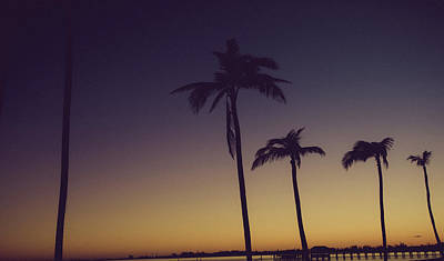 Photograph - Palm Trees In The Morning Light by Anthony Doudt
