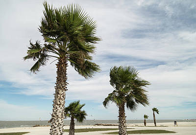 Photograph - Palm Trees In The Wind by Bonnie Davidson