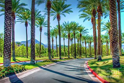 Photograph - Palm Trees Lining Road by David Zanzinger