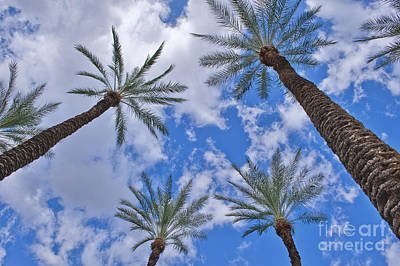 Photograph - Palm Trees Looking Up 7 by David Zanzinger