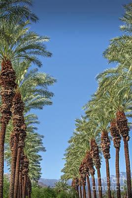Photograph - Palm Trees Looking Up by David Zanzinger
