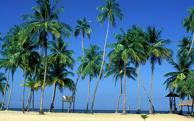 Photograph - Palm Trees On Beach In Trinidad by Carl Purcell