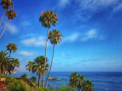 Photograph - Palm Trees On The Pacific by Dan Miller