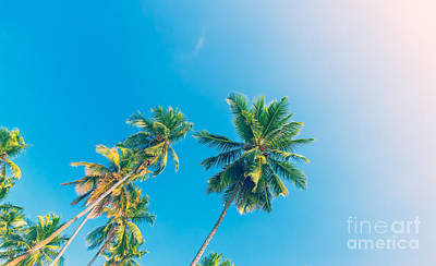 Photograph - Palm Trees Over Blue Sky Background by Anna Om