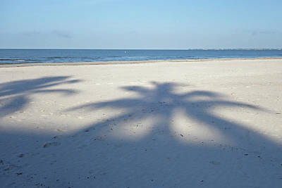 Photograph - Palm Trees Over Fort Myers Beach Fort Myers Florida by Toby McGuire