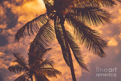 Photograph - Palm Trees Over Sunset Sky Background by Anna Om