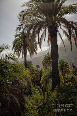 Photograph - Palm Trees by Patricia Hofmeester