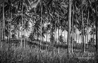 Photograph - Palm Trees Plantation by Anna Om