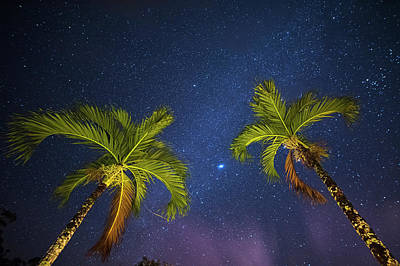 Photograph - Palm Trees Reaching For The Stars Belmopan Belize Rainforest by Toby McGuire