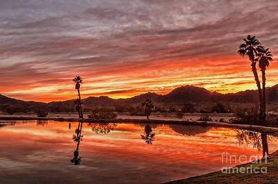 Photograph - Palm Trees Reflections by Robert Bales
