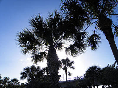 Bridge Photograph - Palm Trees by Ric Schafer