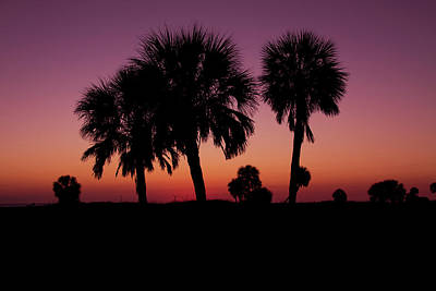 Photograph - Palm Trees Silhouette by Joel Witmeyer
