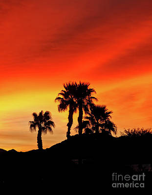 Photograph - Palm Trees Silhouettes by Robert Bales