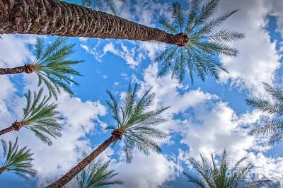Photograph - Palm Trees Sky Beautiful Clouds by David Zanzinger