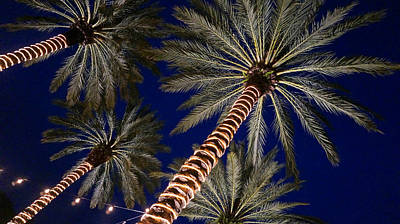 Palm Trees Wrapped In Lights Art Print