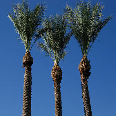 Photograph - Palm Trio by Brendon Bradley