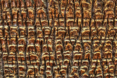 Photograph - Palm Trunk Detail by Roger Passman