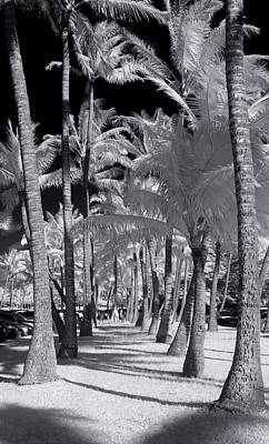 Infra-red Photograph - Palm Walkway by Sean Davey