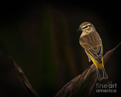 Warbler Digital Art - Palm Warbler by Linda King