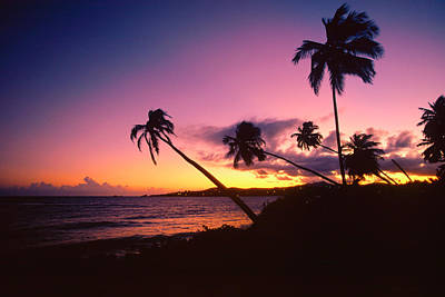 Palmas Del Mar Sunset Puerto Rico Art Print by George Oze