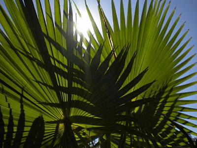 Art Print featuring the photograph Palmetto 3 by Renate Nadi Wesley