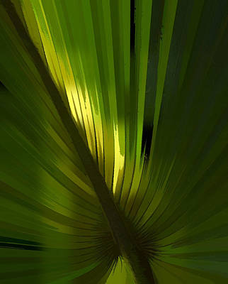 Overhang Photograph - Palmetto Embrace by Marvin Spates