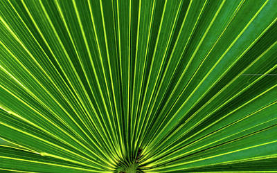 Photograph - Palmetto by Robert Mitchell