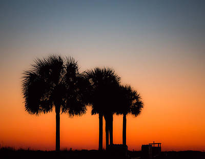 Photograph - Palmetto State Of Mind by Donnie Whitaker