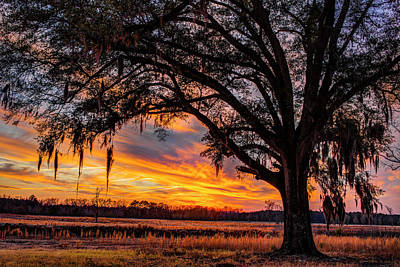 Photograph - Palmetto Sunset by Chris Austin