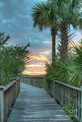 Photograph - Palmetto Tree Sunset In Mount Pleasant Sc by Dale Powell