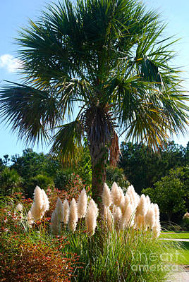 Palmetto Tree  Art Print by Susanne Van Hulst