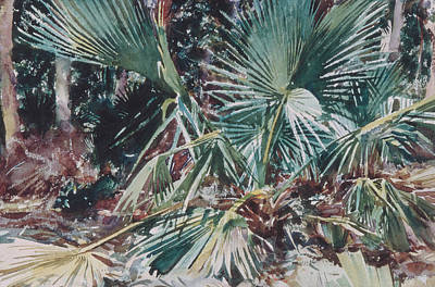 Drawing - Palmettos by John Singer Sargent
