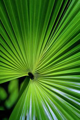 Palmgreen Art Print