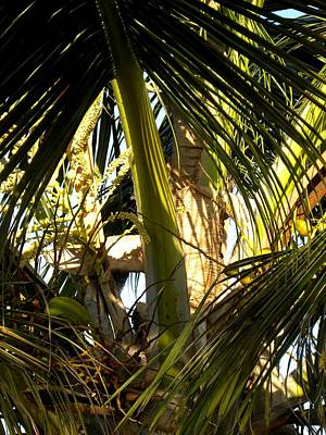 On Paper Photograph - Palms 1 by Patricia Bigelow
