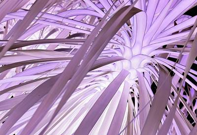 Photograph - Palms 28cn by John Hintz