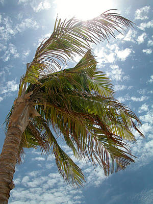 Palms Against The Sky - Mexico Art Print