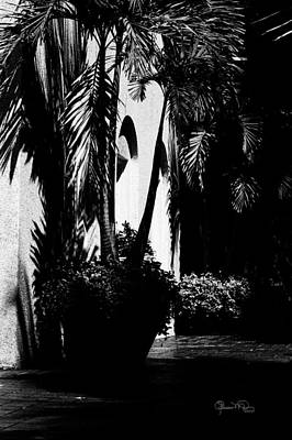 Photograph - Palms And Arches by Susan Molnar