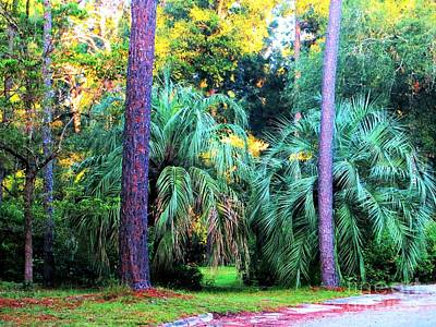 Photograph - Palms And Pines by Tim Townsend