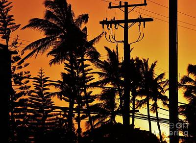 Photograph - Palms And Power Lines At Sunset by Craig Wood