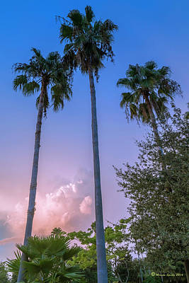 Palms And Storms Print by Marvin Spates