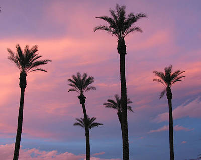 Art Print featuring the photograph Palms At Sunset by Phyllis Kaltenbach