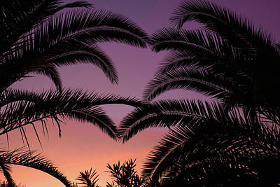 Photograph - Palms At Sunset by Sue Cullumber