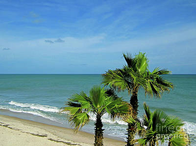 Palms At Vero Beach Art Print