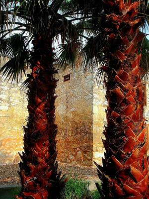 Photograph - Palms Behind The Alamo by Beth Akerman